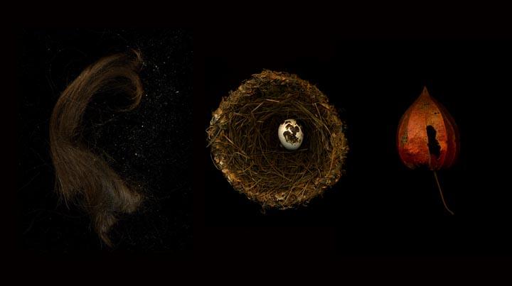 <b>hair nest lantern</b><br> 2008<br>  16 x 20 in.